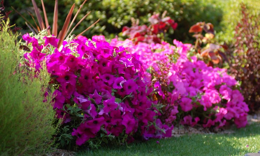 5 растений, которые стоит посадить в августе на даче