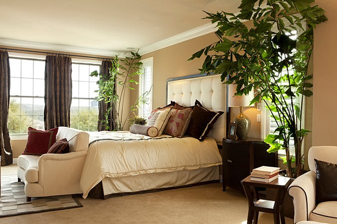 5 красивых комнатных растений, которые сделают вашу спальню еще уютнее