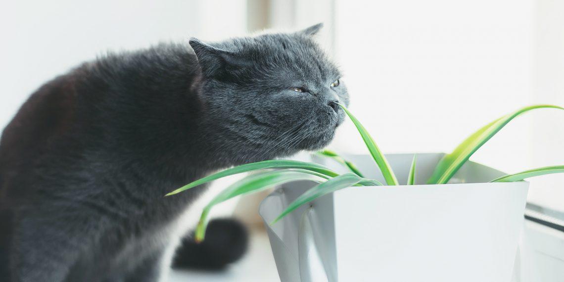 Что делать, чтобы дома всегда приятно пахло